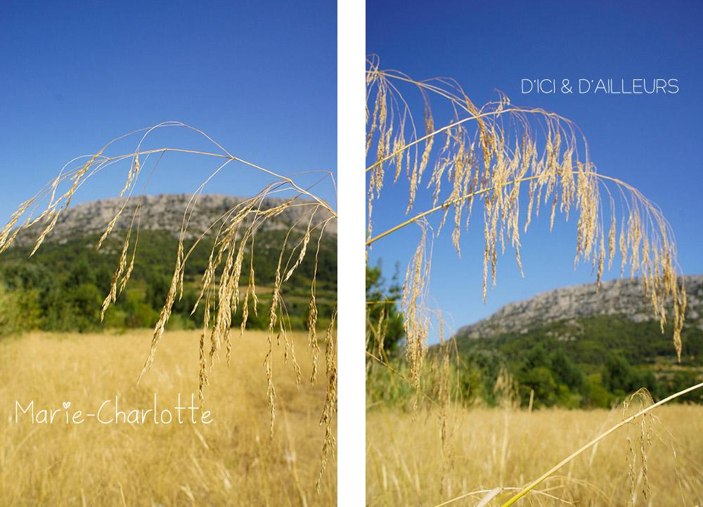 pyrenees_orientales_2012