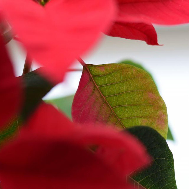 11-decembre-rougevert-violetteetsarrasin